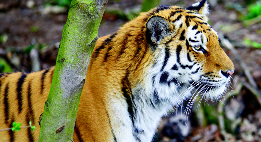 Win a VIP tour of Yorkshire Wildlife Park supporting image