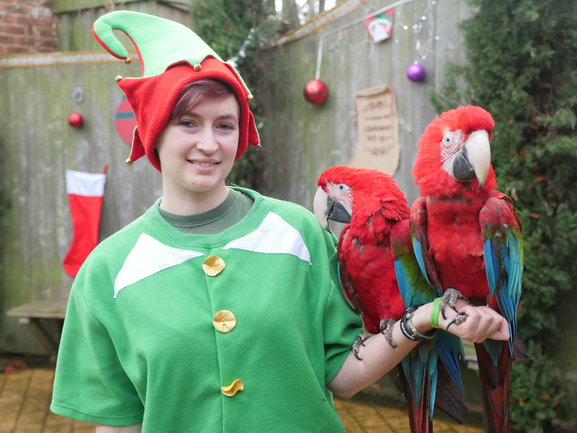 Santa, Elves & Sleigh Bells at the Tropical Butterfly House thumbnail