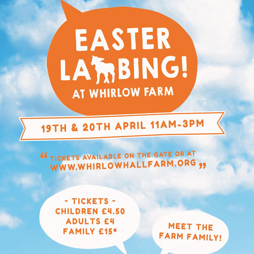 Easter Lambing at Whirlow Hall Farm thumbnail