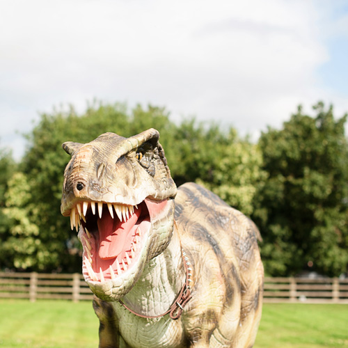 Dinosaurs spotted at Cannon Hall Farm thumbnail