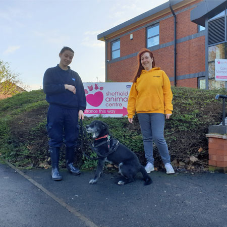 RSPCA Sheffield and Positive Paws announce joint fundraising venture Thumbnail